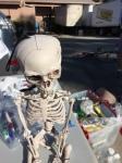 LKHC Skeleton