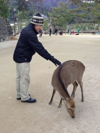 This Miyajima deer doesn't care for the fact that I have worn baggy and ill-fitted clothes for many years, but I do!
